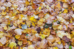 Folhas caídas na grama no parque Imagem de Stock Royalty Free
