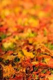 Folhas caídas na luz da noite fotos de stock royalty free