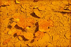 Folhas caídas na poça Fotografia de Stock Royalty Free