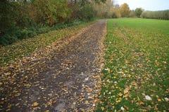 Folhas caídas na queda Imagem de Stock Royalty Free