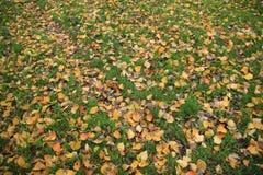 Folhas caídas na queda Fotos de Stock