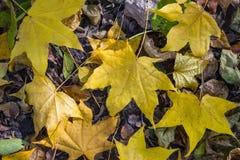 Folhas caídas na terra foto de stock royalty free
