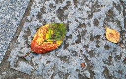 Folhas caídas na terra Foto de Stock