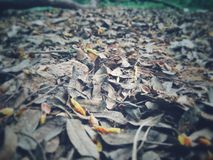 Folhas caídas na terra Fotografia de Stock