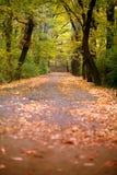 Folhas caídas na terra com árvores imagem de stock