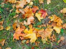 Folhas caídas na terra no parque no outono Imagem de Stock