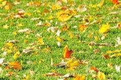 Folhas caídas no gramado Fotografia de Stock Royalty Free