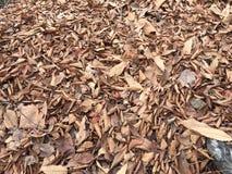 Folhas caídas no inverno Fotos de Stock Royalty Free