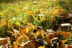 Folhas caídas no parque do outono Imagem de Stock Royalty Free