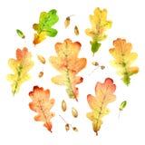 Folhas caídas tiradas mão do carvalho da aquarela ajustadas Ilustração Stock