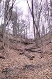 Folhas caídas trajeto do switchback do monte da floresta imagem de stock