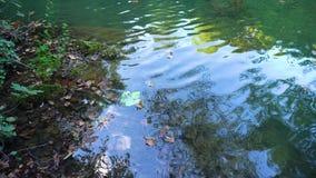 Folhas calmas da lagoa e do outono vídeos de arquivo
