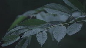 Folhas chuvosas video estoque