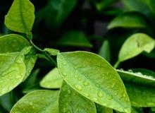 Folhas chuvosas fotografia de stock