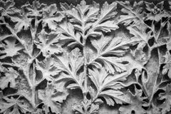 Folhas cinzeladas em um fundo de pedra fotos de stock