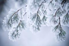 Folhas cobertas neve no inverno Fotos de Stock Royalty Free