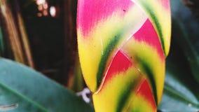 Folhas coloridas Imagem de Stock Royalty Free