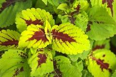 Folhas coloridas Foto de Stock