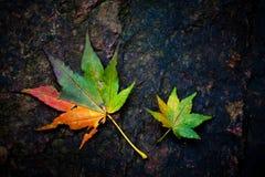 Folhas coloridas Foto de Stock Royalty Free