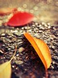 Folhas coloridas Fotos de Stock Royalty Free