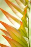 Folhas coloridas Fotografia de Stock Royalty Free