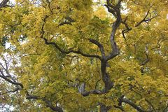 Folhas coloridas bonitas de Autumn Leaves, amarelas e verdes fotografia de stock