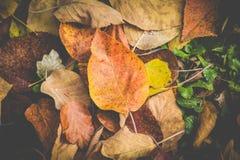 Folhas coloridas bonitas do outono na terra Foto de Stock Royalty Free