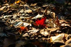 Folhas coloridas caídas Fotos de Stock