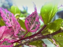 Folhas coloridas com fundo raso Fotografia de Stock Royalty Free