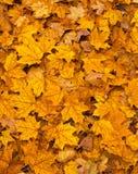 Folhas coloridas da queda na terra Imagem de Stock