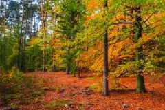 Folhas coloridas das árvores de floresta das profundidades do outono Foto de Stock