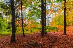 Folhas coloridas das árvores de floresta das profundidades do outono Fotografia de Stock Royalty Free