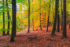 Folhas coloridas das árvores de floresta das profundidades do outono Fotos de Stock Royalty Free
