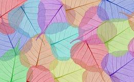 Folhas coloridas decorativas do esqueleto Foto de Stock Royalty Free