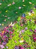 Folhas coloridas do jardim e de outono Foto de Stock