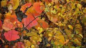 Folhas coloridas do outono Fotos de Stock Royalty Free