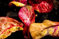 Folhas coloridas do verão fotos de stock royalty free