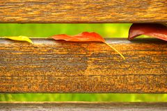 folhas coloridas e fundo verde das barras de madeira Imagens de Stock