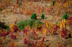 Folhas coloridas em árvores na floresta do outono foto de stock royalty free