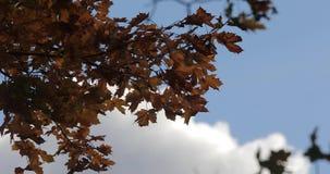 Folhas coloridas em ramos de árvore contra o céu e as nuvens no tempo do outono video estoque