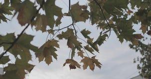 Folhas coloridas em ramos de árvore contra o céu e as nuvens no tempo do outono vídeos de arquivo