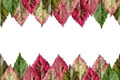 Folhas coloridas. fundo Fotografia de Stock Royalty Free