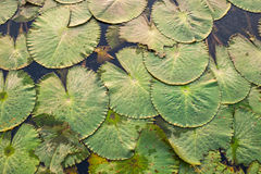 Folhas coloridas na água Fotos de Stock
