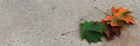 3 folhas coloridas no estreito de R Imagens de Stock