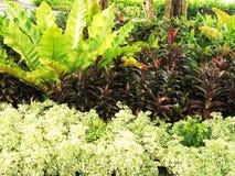 Folhas coloridas no jardim Foto de Stock Royalty Free
