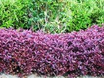 Folhas coloridas no jardim Fotos de Stock