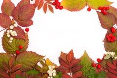 Folhas coloridas no outono Beira isolate Fotos de Stock