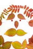 Folhas coloridas no outono Cara isolate Imagem de Stock Royalty Free