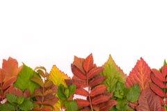 Folhas coloridas no outono gradient isolate Imagens de Stock