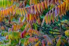 Folhas coloridas no outono foto de stock